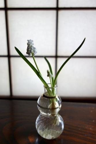 早春のガラス器_a0197730_10325060.jpeg