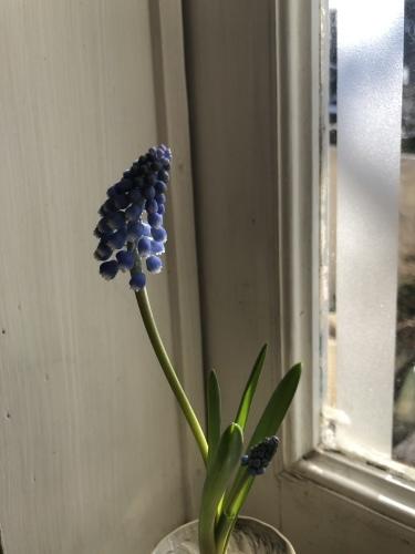 早春のガラス器_a0197730_10331055.jpeg