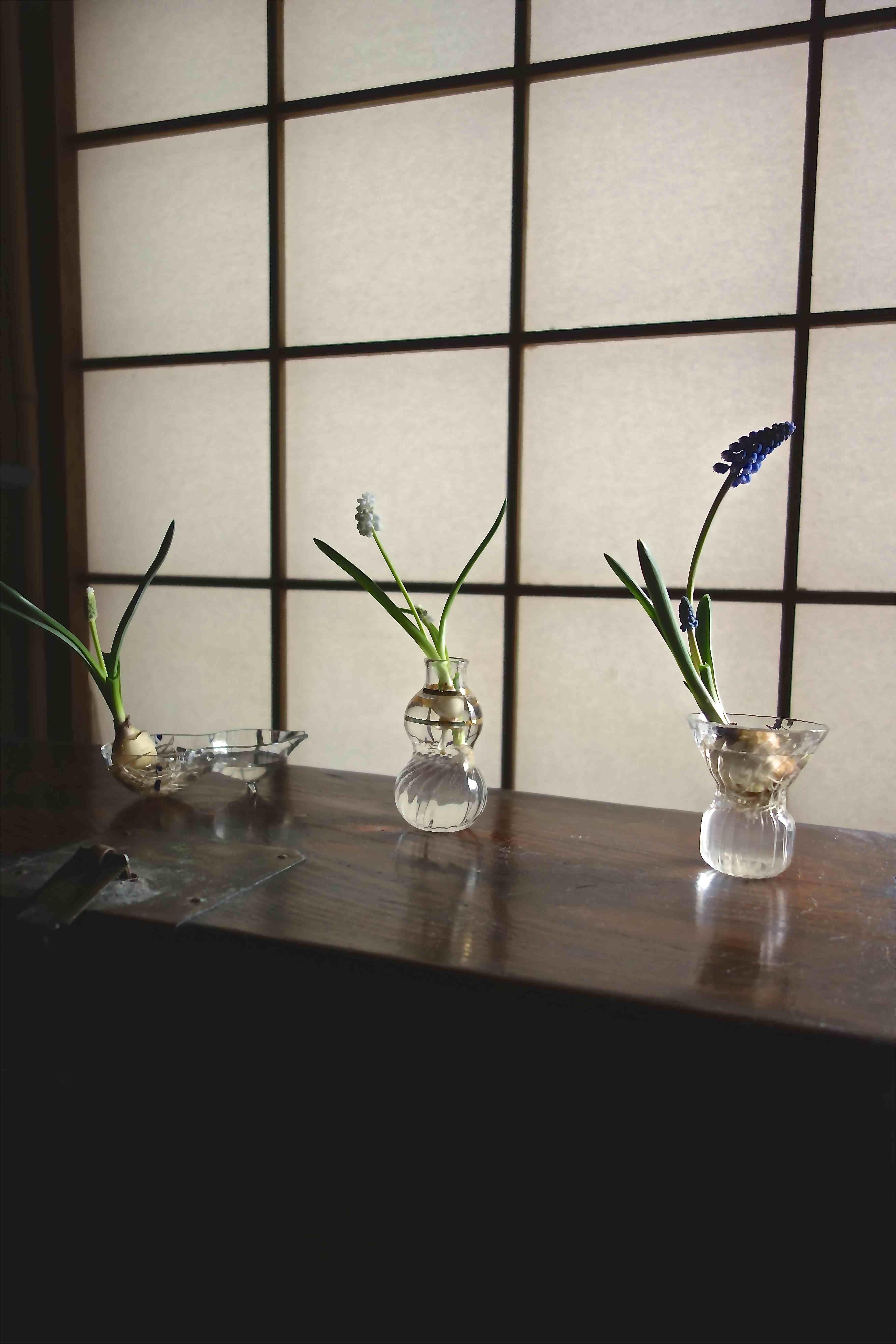 早春のガラス器_a0197730_10495259.jpg