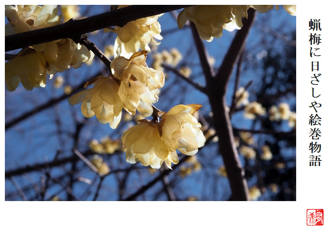 蝋梅に日ざしや絵巻物語_a0248481_23051252.jpg