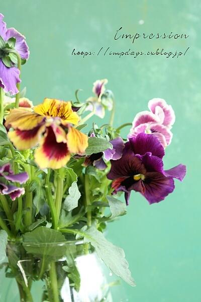 切り花のパンジー_a0085317_13033386.jpg