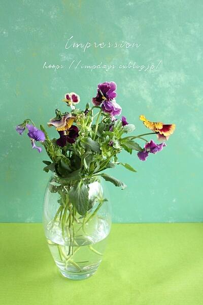 切り花のパンジー_a0085317_13033638.jpg