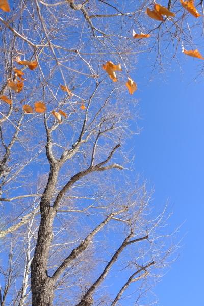 フィールド撮影という名の朝散歩♪_b0174425_10293286.jpg