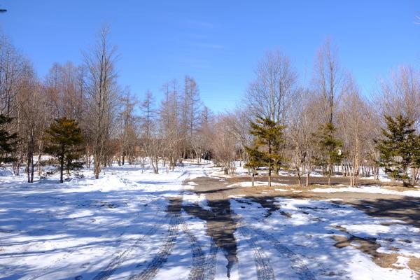 フィールド撮影という名の朝散歩♪_b0174425_10471929.jpg