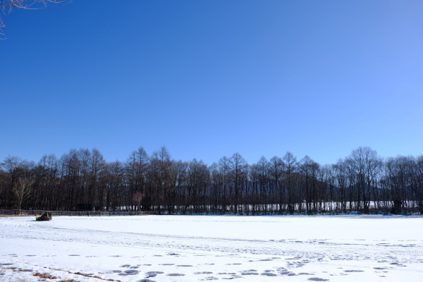フィールド撮影という名の朝散歩♪_b0174425_21173052.jpg