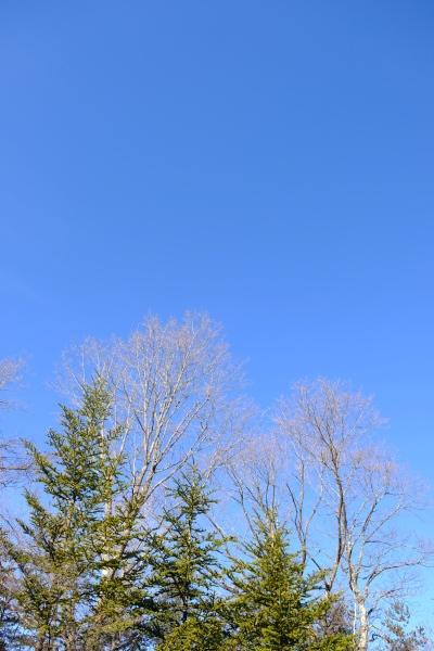 フィールド撮影という名の朝散歩♪_b0174425_21174634.jpg