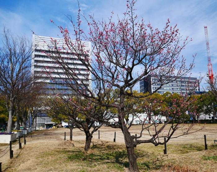 和歌山城西の丸広場にて  2021-02-11 00:00_b0093754_23254929.jpg