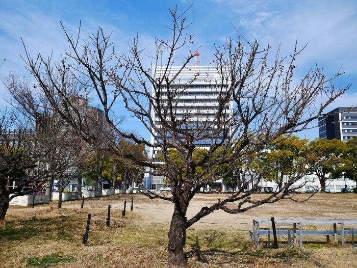 和歌山城西の丸広場にて  2021-02-11 00:00_b0093754_23262473.jpg