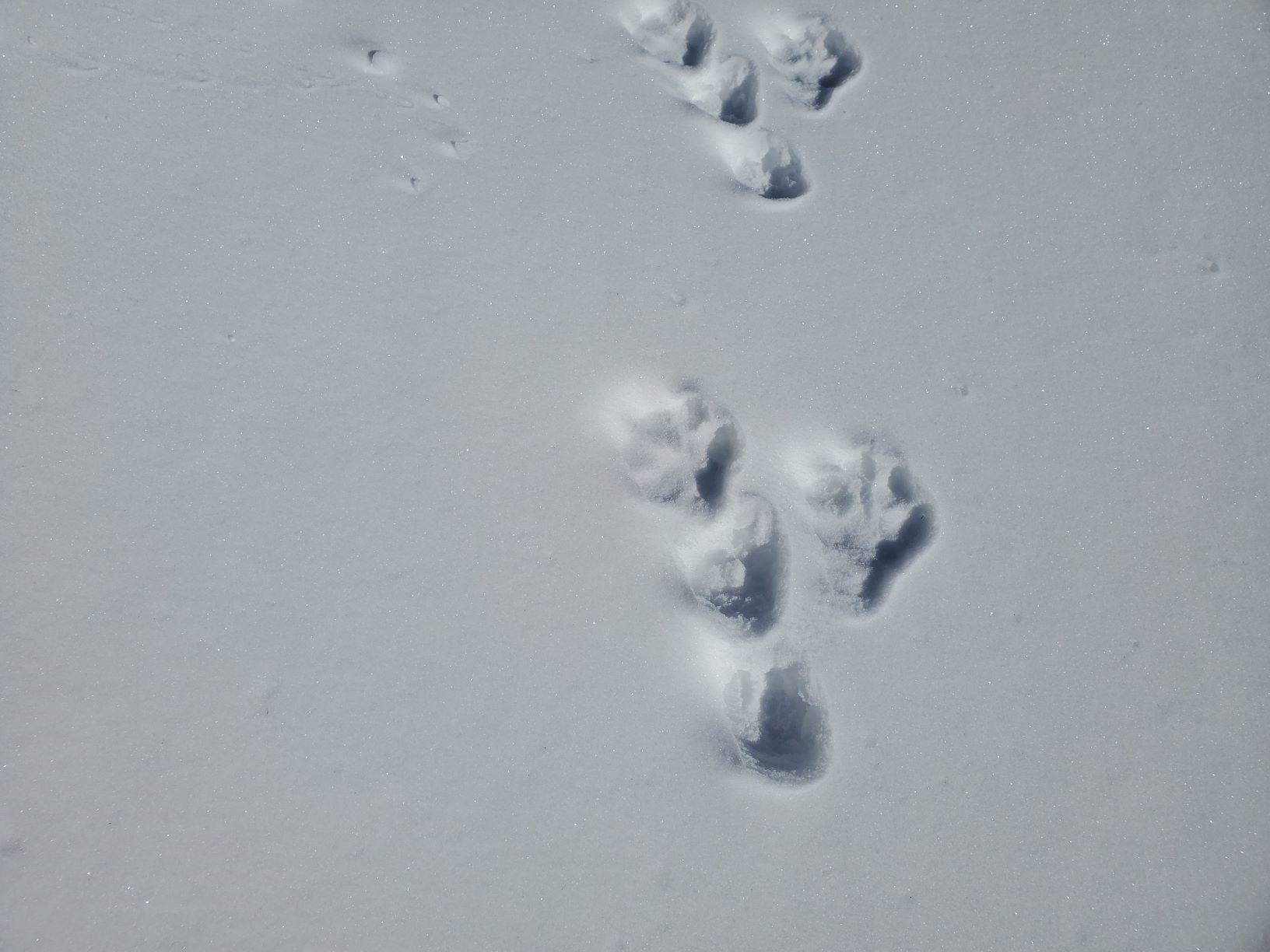 ウサギの足跡_b0304722_21375461.jpg