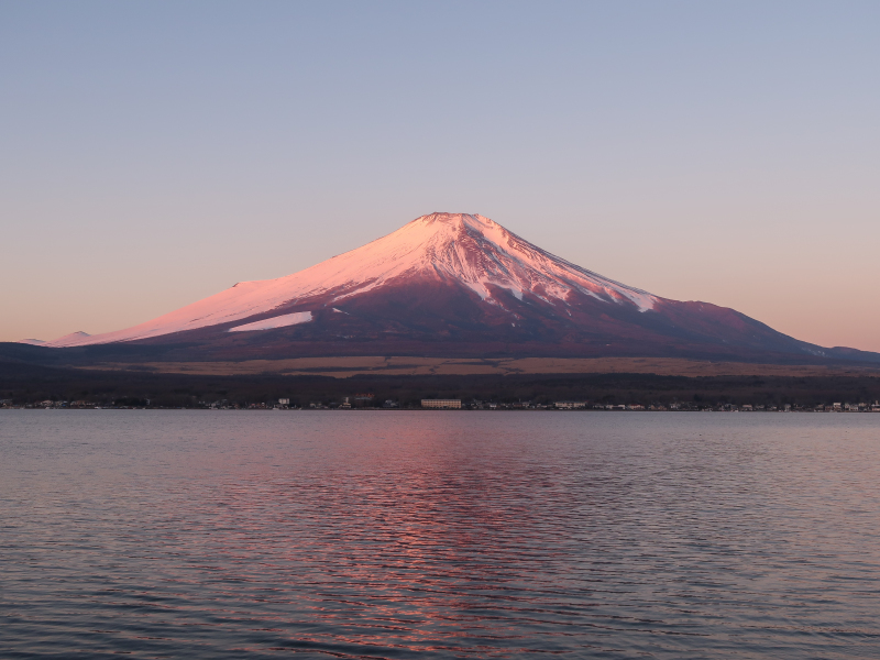 2021 2.11 山中湖レンジャク_e0200922_18022217.jpg