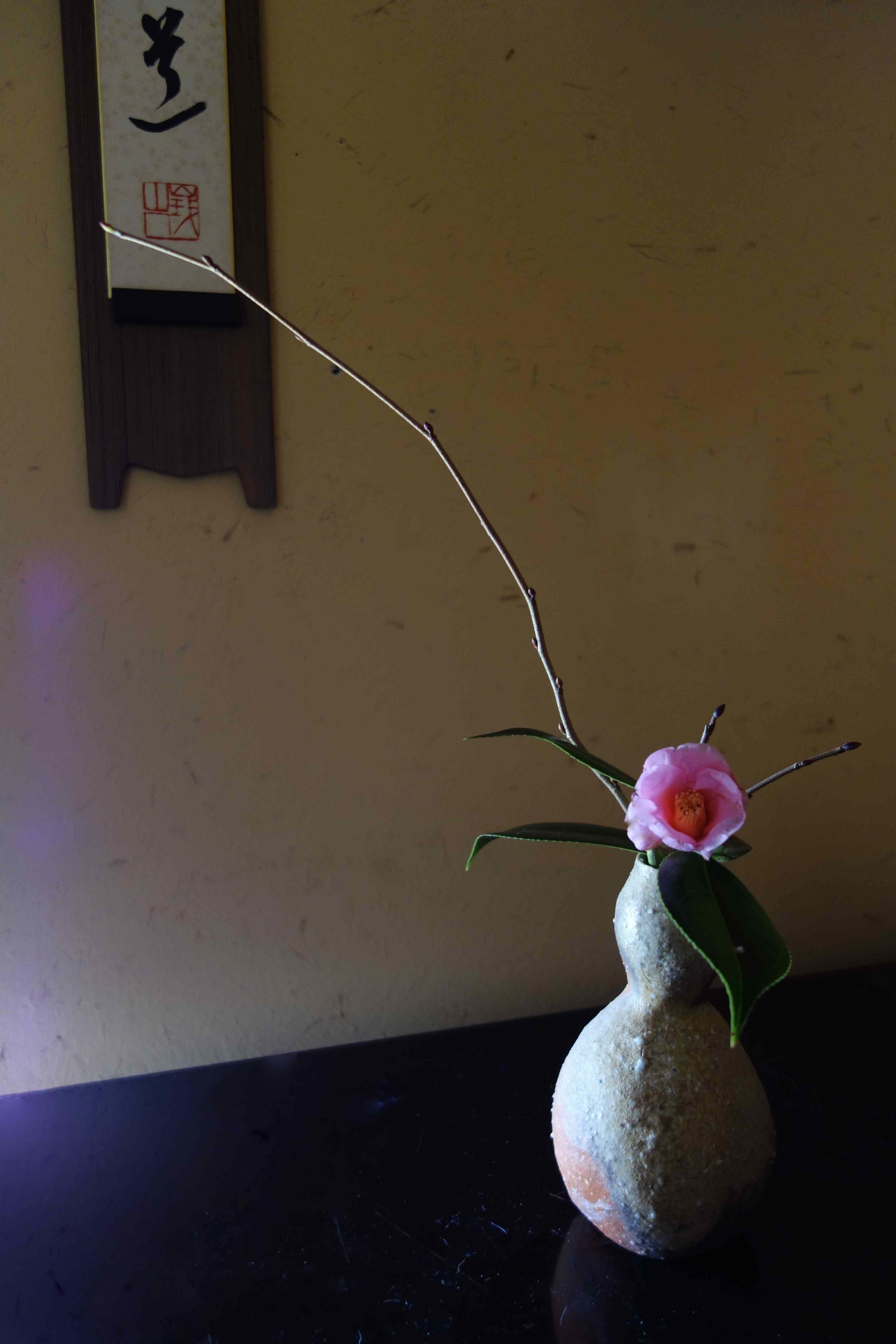 早春のお楽しみ_a0197730_14411799.jpg