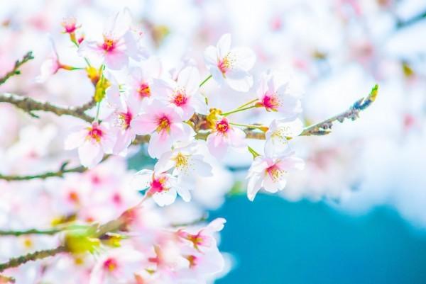 春の体験教室をいたします。_b0299052_15514880.jpg