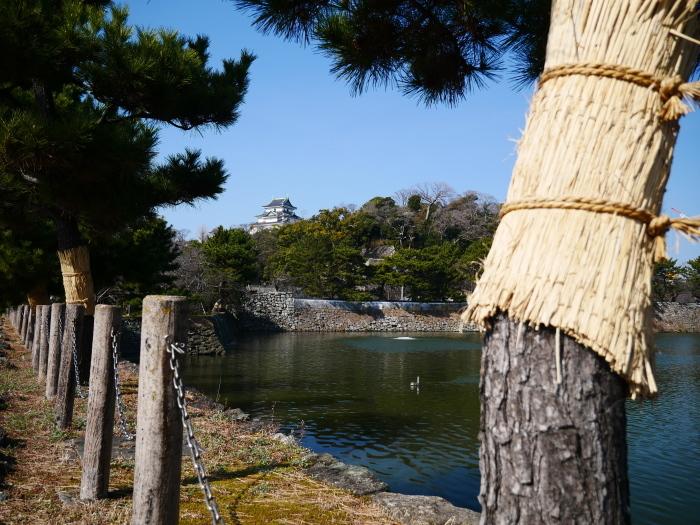 和歌山城の松のこも巻き  2021-02-13 00:00_b0093754_22085004.jpg