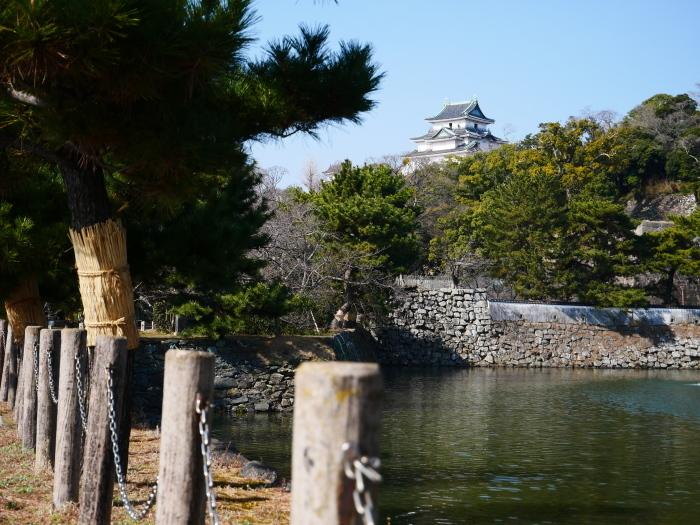 和歌山城の松のこも巻き  2021-02-13 00:00_b0093754_22090662.jpg