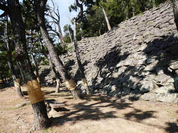 和歌山城の松のこも巻き  2021-02-13 00:00_b0093754_22103837.jpg