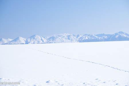 雪原の足跡~1月の美瑛_d0340565_19203502.jpg