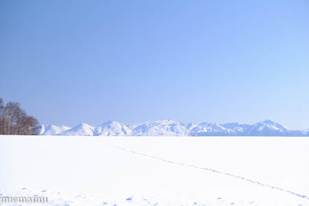 雪原の足跡~1月の美瑛_d0340565_19204250.jpg
