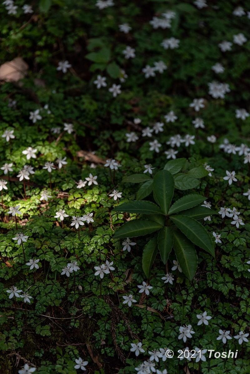妖精の森へ 1_c0350572_15465967.jpg