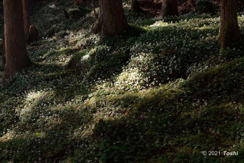 妖精の森へ 1_c0350572_15471046.jpg