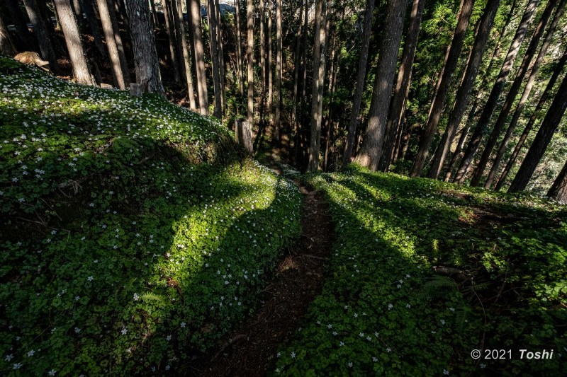 妖精の森へ 1_c0350572_15485387.jpg