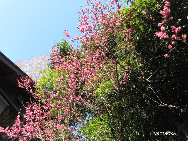 浅春の寺。_f0071480_17212076.jpg