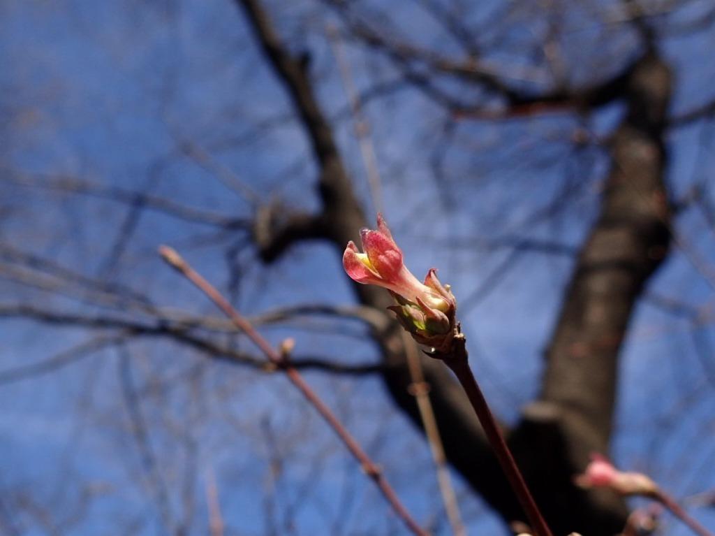 つつましく咲いてます_b0049307_11403199.jpg