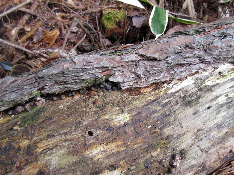 越冬中のアメンボを見たのは生まれて初めてです_b0025008_10035078.jpg