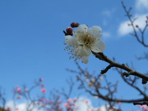 早春!梅花と書画を愉しむ。京博「新聞人のまなざし展」ご紹介、3月7日まで。_a0279738_15442301.jpg