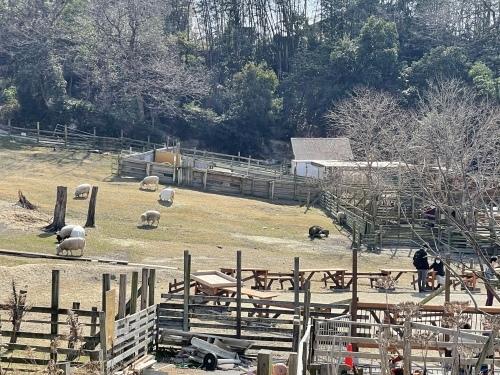 愛知牧場へ行ってきました♪_f0373339_13241636.jpeg