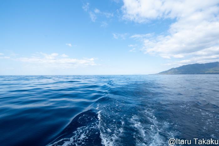 屋久島の鯨類、マダライルカ、シワハイルカ。_b0186442_11101602.jpg