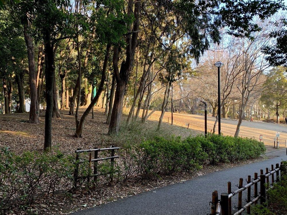 ☆昨日も早朝散歩☆_c0092953_00092397.jpg