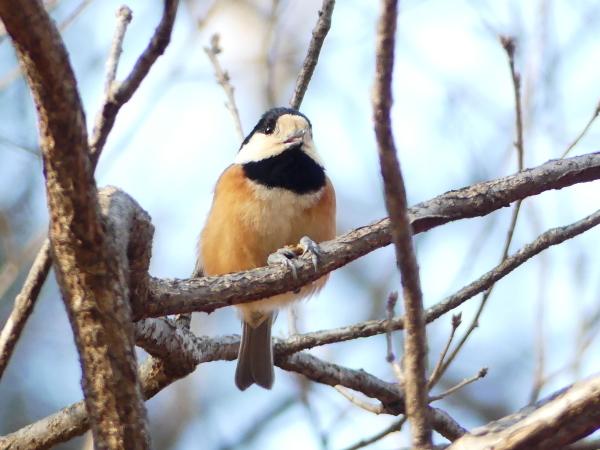 冬の青い鳥_a0351368_23190595.jpg