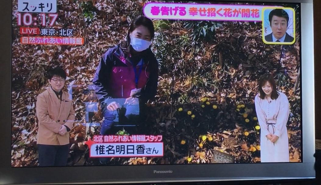 自然園のフクジュソウがテレビで紹介されました!_f0361087_13094743.jpg