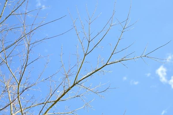冬から早春への庭 2021_d0025294_15092890.jpg