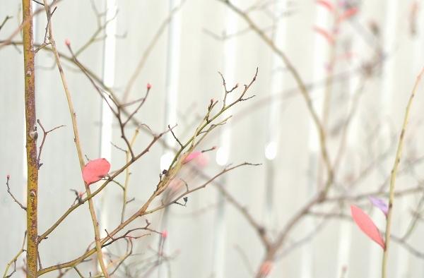 冬から早春への庭 2021_d0025294_15405375.jpg