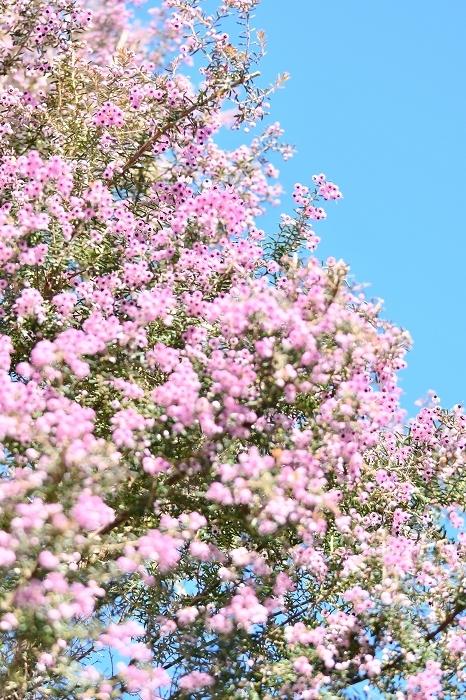 冬から早春への庭 2021_d0025294_15414836.jpg