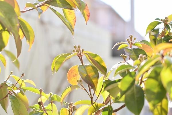 冬から早春への庭 2021_d0025294_15454615.jpg
