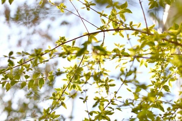 冬から早春への庭 2021_d0025294_15471194.jpg