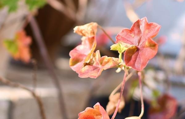 冬から早春への庭 2021_d0025294_15473488.jpg