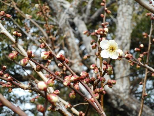 少しずつ春が_f0305844_16380762.jpg