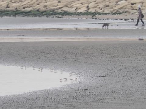★葛西臨海・海浜公園調査の全域調査結果2021年2月_e0046474_23333040.jpg
