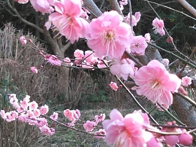 春の足音、聞こえてきましたよ~💕_c0280108_02561464.jpg