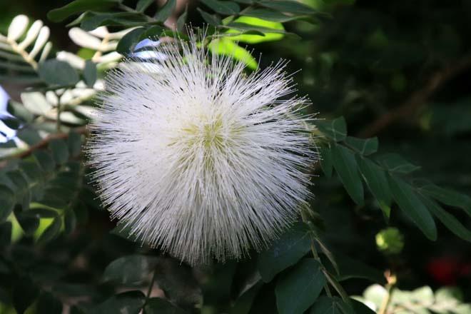 花を求めて 宇治市植物公園_e0048413_21304663.jpg