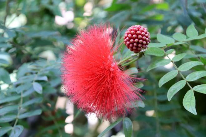 花を求めて 宇治市植物公園_e0048413_21305311.jpg
