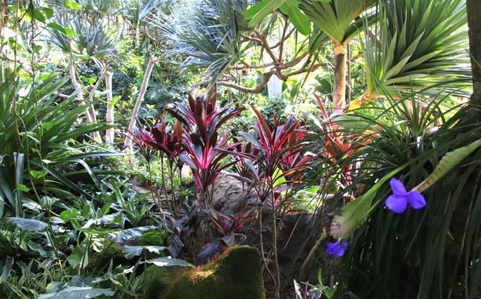 花を求めて 宇治市植物公園_e0048413_21305880.jpg