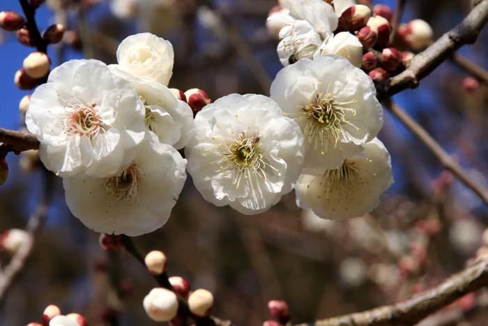 花を求めて 宇治市植物公園_e0048413_21310257.jpg