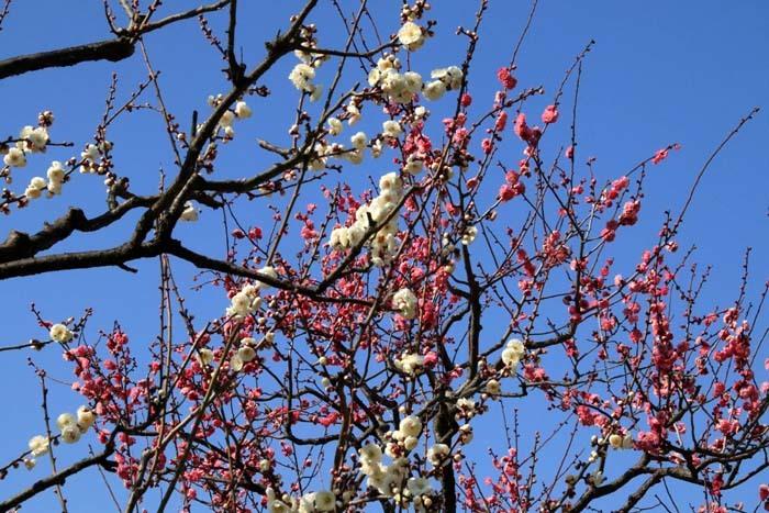 花を求めて 宇治市植物公園_e0048413_21310836.jpg