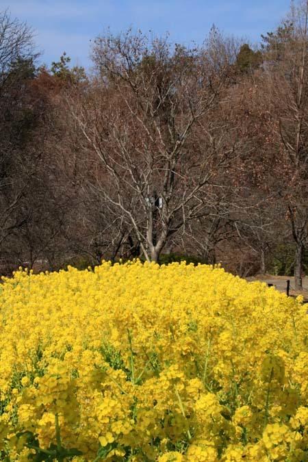 花を求めて 宇治市植物公園_e0048413_21311379.jpg