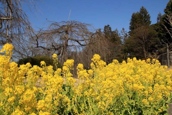 花を求めて 宇治市植物公園_e0048413_21311862.jpg