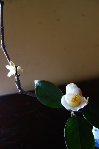 早春のお楽しみ_a0197730_21545897.jpg
